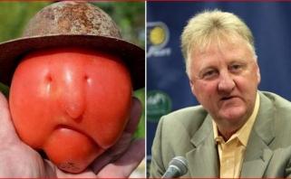 Socialiniuose tinkluose plinta į L.Birdą panašaus pomidoro nuotrauka
